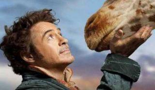 Robert Downey Jr Petting A Giraffe In Dolittle