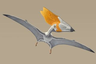 An illustration of the pterosaur Thalassodromeus sethi as it would've looked when alive 110 million years ago.