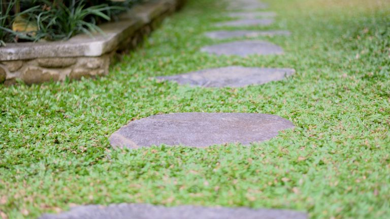 Stepping stones forming a garden path
