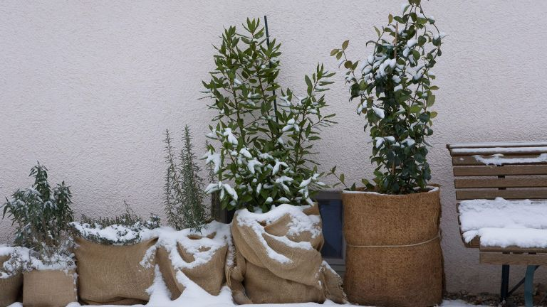 gardening jobs for December: wrap up pots to protect them from the cold
