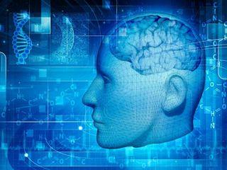 conceptual brain