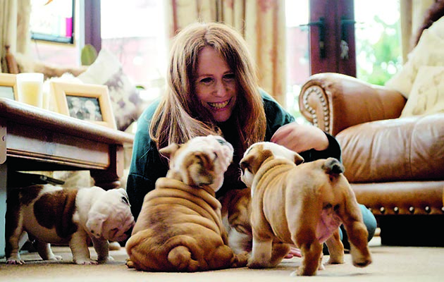 Catherine Tate investigates the state of one of the most iconic and loved breeds of dog – the British bulldog.