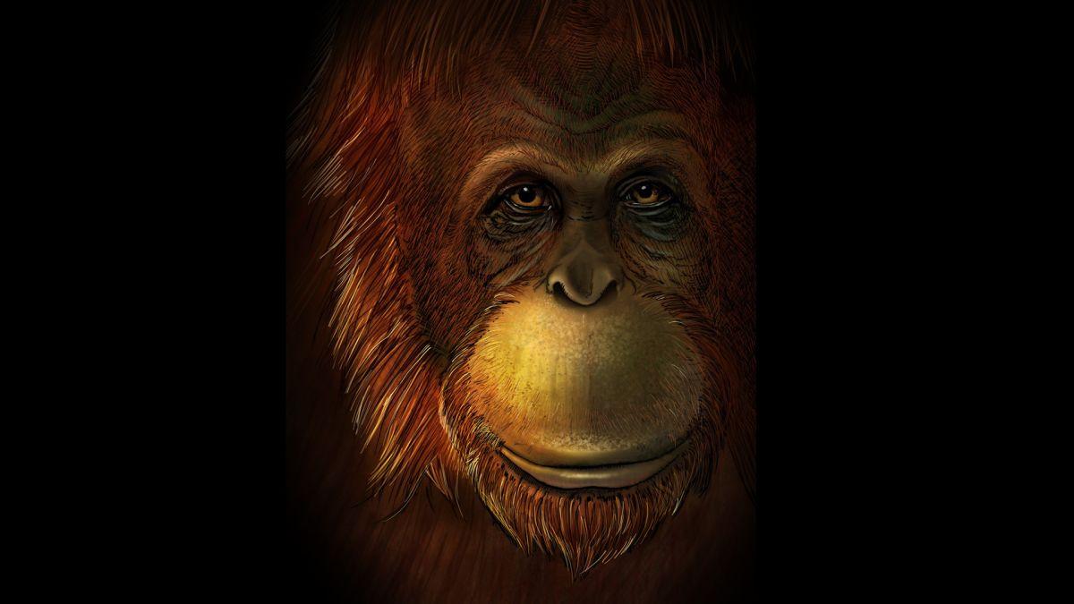 Closest Living Relative of Extinct 'Bigfoot' Found