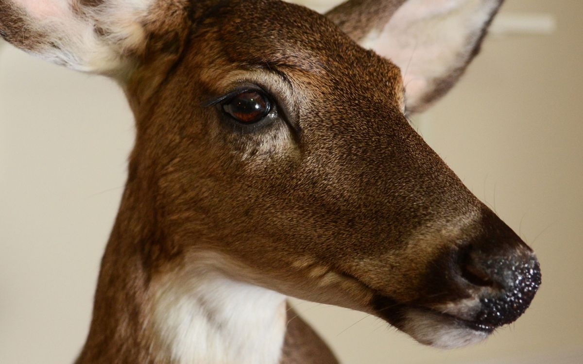 Get Stuffed: Which Animals Challenge Taxidermists the Most