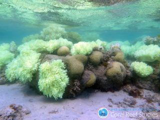 Coral bleaching can be seen on Lizard Island on the Great Barrier Reef in Australia.