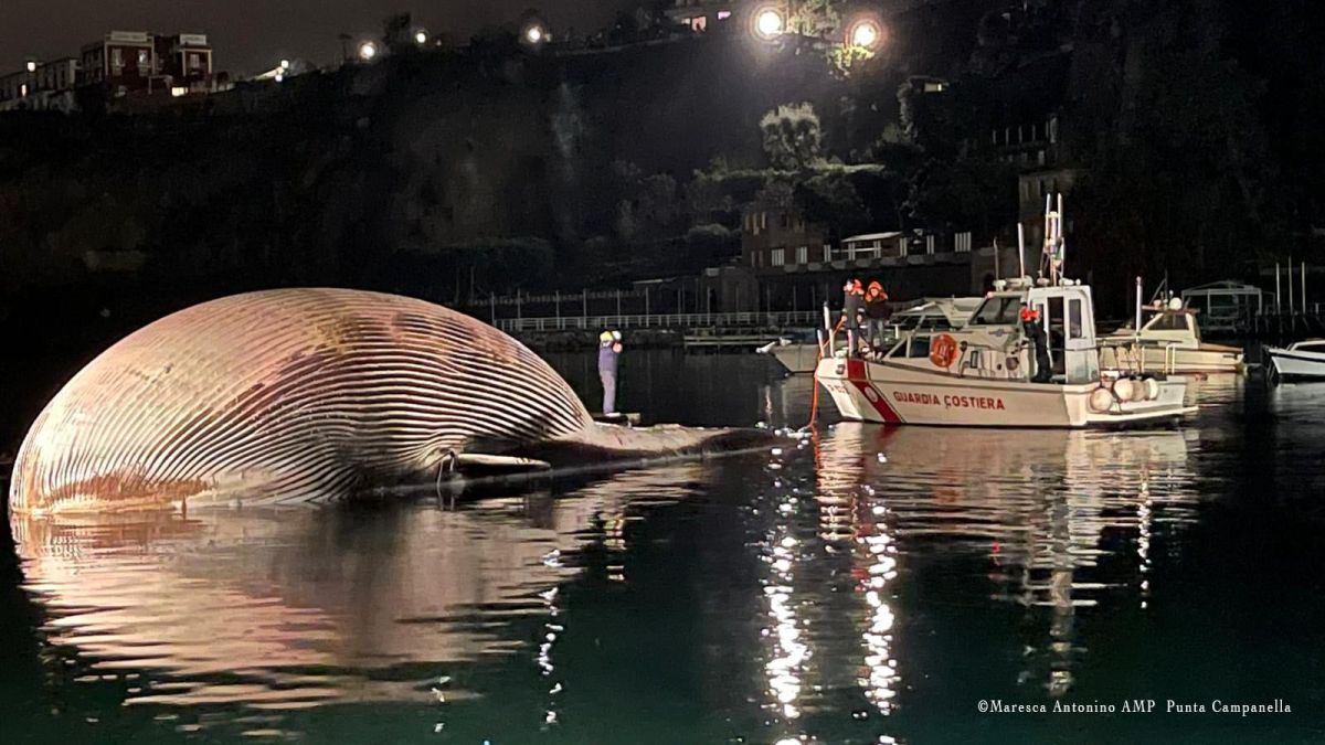 Dead whale in the Mediterranean probably 'one of the largest' ever found