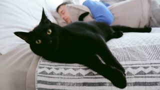 Sheba's relaxation video, 4am Stories, looks to help owners woken up by their feline friend.