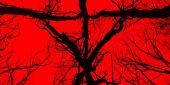 Why The New Blair Witch Movie Ignores Book Of Shadows: Blair Witch 2