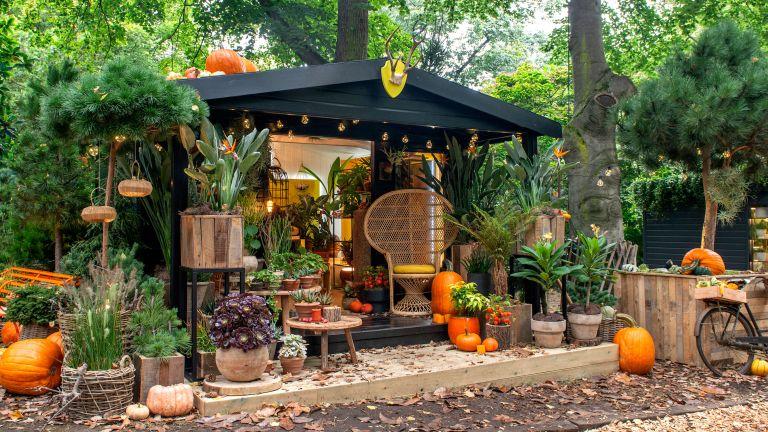 winning houseplant studio at chelsea flower show 2021