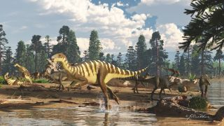 Archeologists discovered a new species of dinosaur <em> Galleonosaurus dorisae</em>in Australia.