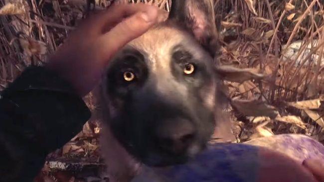 Кадры из новой Blair Witch заставят вас влюбиться в игровую собаку