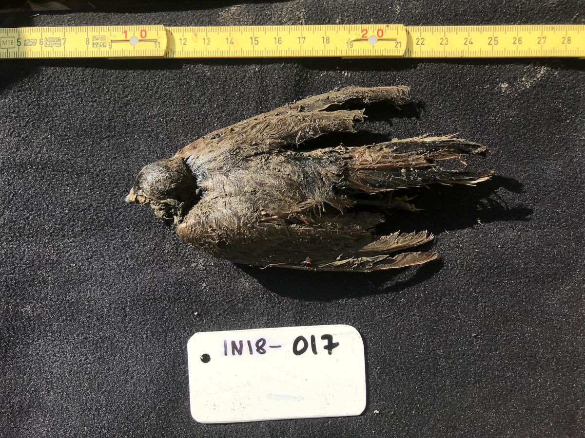 46,000-year-old bird, frozen in Siberian permafrost, looks like it 'died a few days ago'