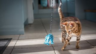 Cat playing with one of the best cat toys