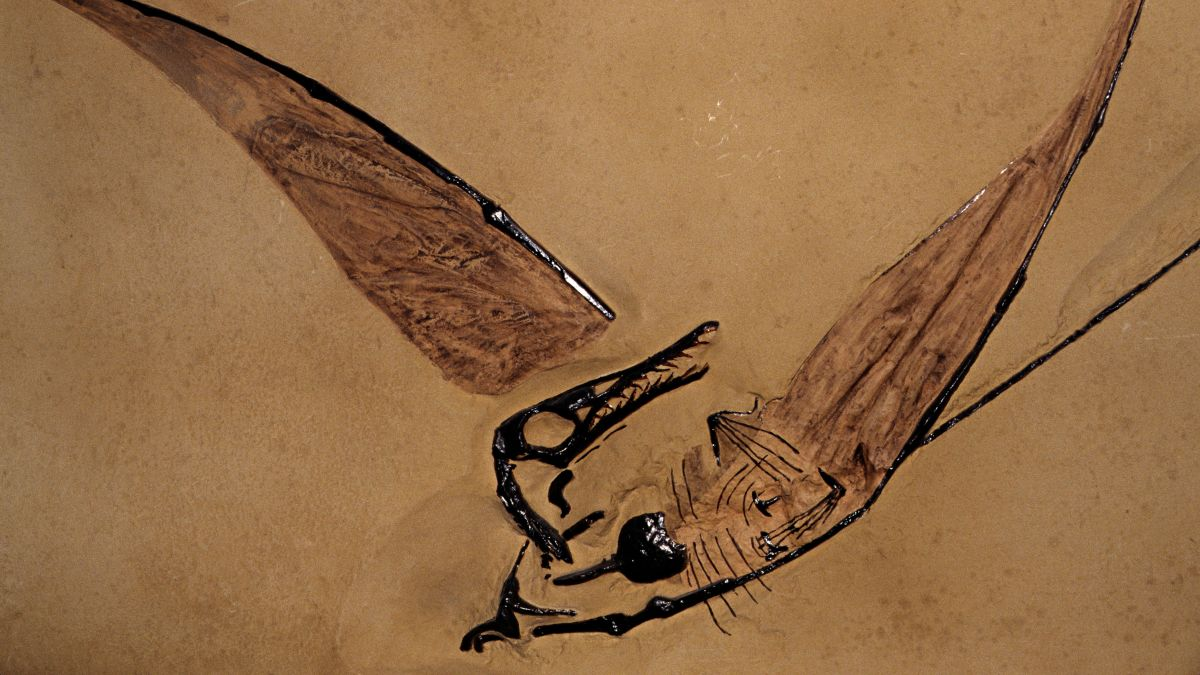 'Flying dragon' fossil found preserved inside a rock in the Chilean desert