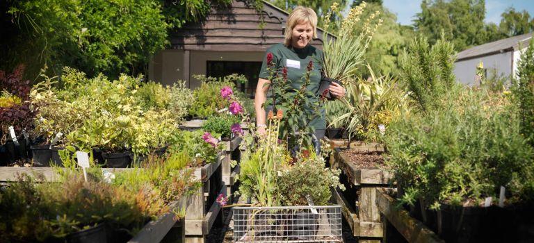 are garden centres open