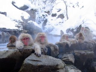 Japanese macaques warm up in a natural hot spring.