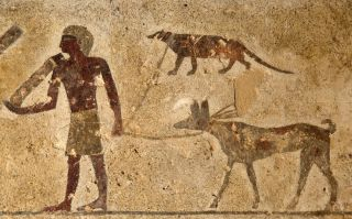 This ancient drawing on the wall of a tomb at Beni Hassan in Egypt shows a hunter holding the leashes of a dog (bottom) and an Egyptian mongoose (top).