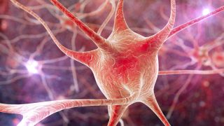 3D computer image of nerve cells, or brain cells.