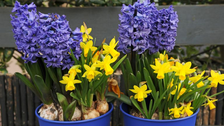 how to plant a last minute spring container