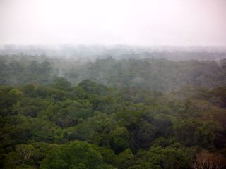 Amazonian rainforest after rain showerin March, 2012.