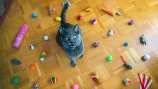 which cat toys are best