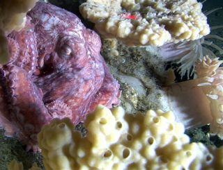 deep sea life, Oceans, Seabeds, Sponges, Underwater shots