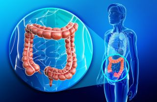 Colon (Large Intestine): Facts, Function & Diseases | Live Science