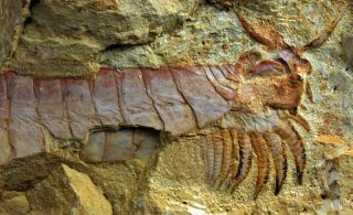 arthropod-fossil