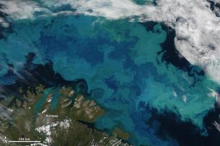 barents-sea-bloom-110817-02