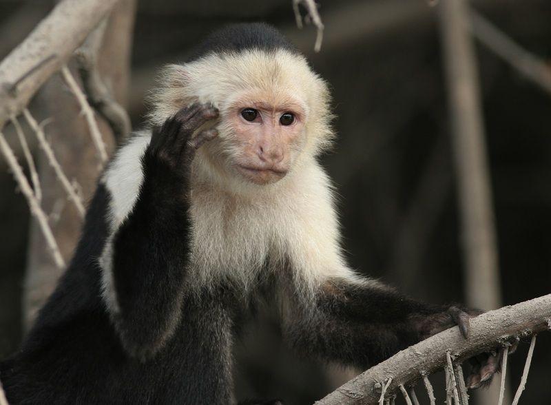 Gallery: Monkey Mug Shots | Live Science