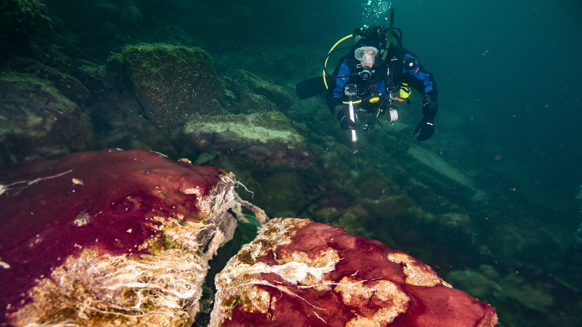 A scuba diver observes the purple, white and green microbes covering rocks in Lake Huron's Middle Island Sinkhole.