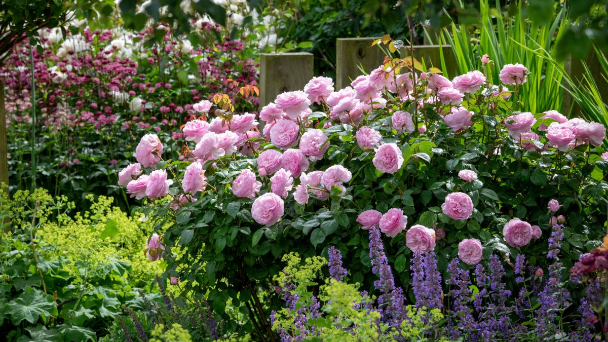5 colour ideas for your garden planting scheme – which one will you choose?