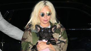 Lady Gaga with French Bulldog