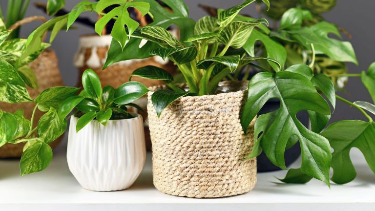 mini monstera and other potted houseplants