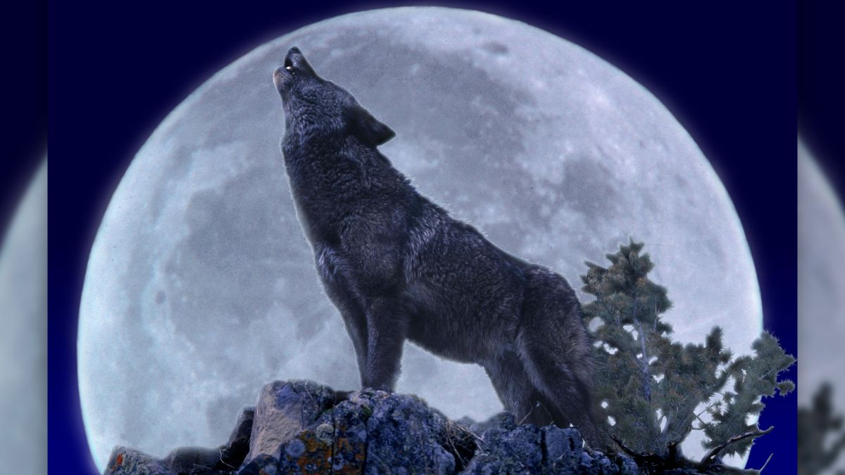 Here's how to watch the full 'wolf moon' this week - Livescience.com
