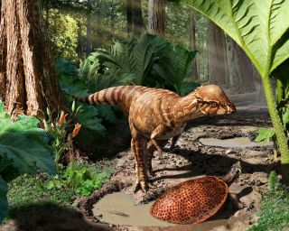 Dome-headed dinosaur