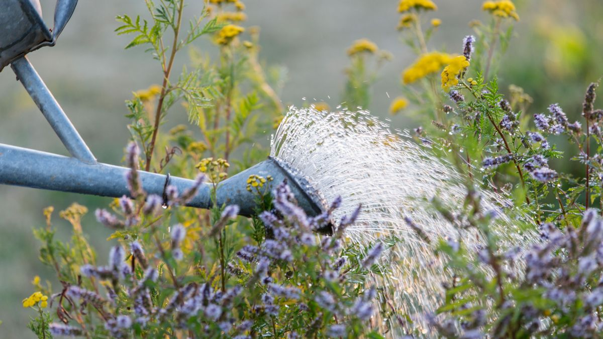 When is the best time to water plants: expert tips on the perfect time to water your garden