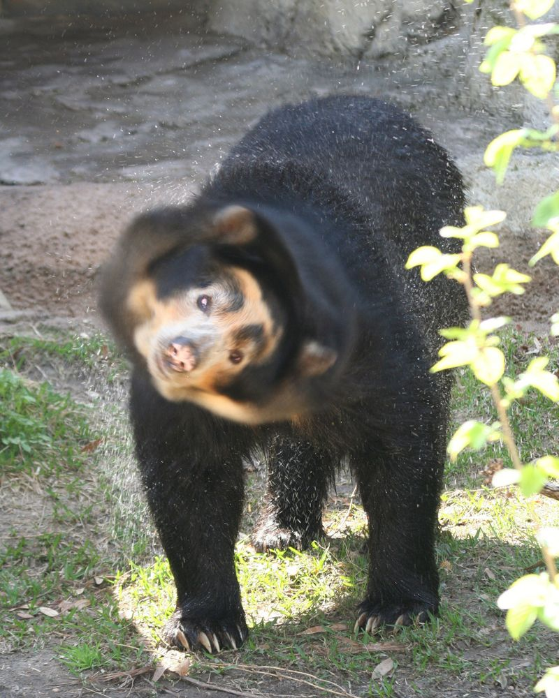 Bears: Facts & Pictures | Live Science