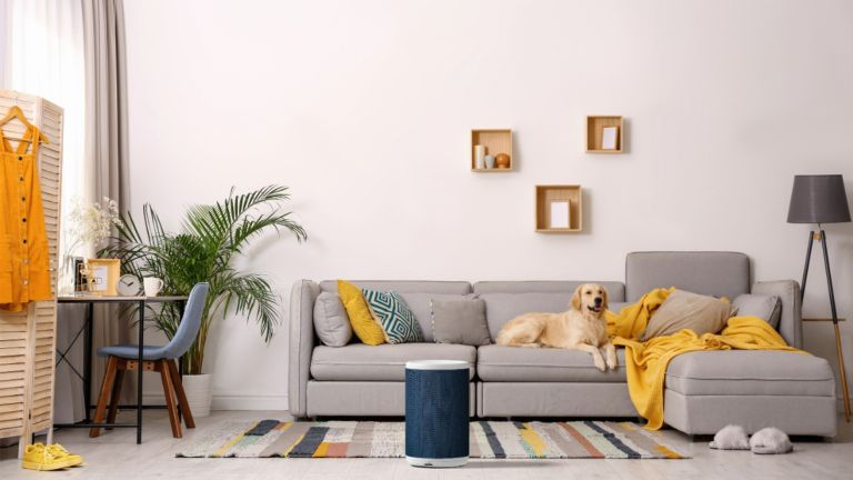 Aeris Aair lite purifier in living room with dog