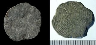 "Two of the 5,000-year-old ""spider stones"" unearthed on the Danish island on Bornholm."