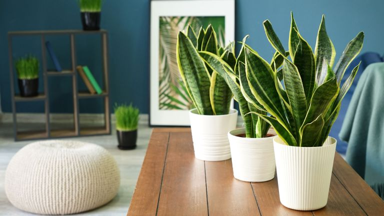 Some popular houseplants can be toxic to humans and animals