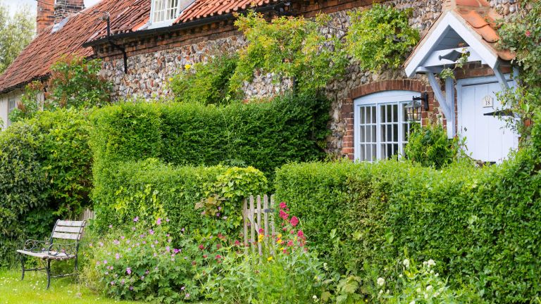 best living fence plants – hedge outside of cottage