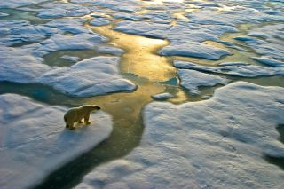 A polar bear standing on sea ice in the Russian Arctic.