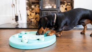 Dog feeding puzzle