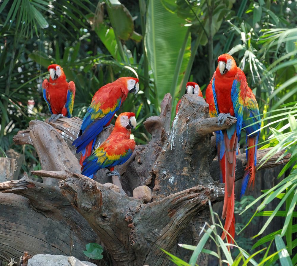 Parrot Facts Habits Habitat Species Live Science
