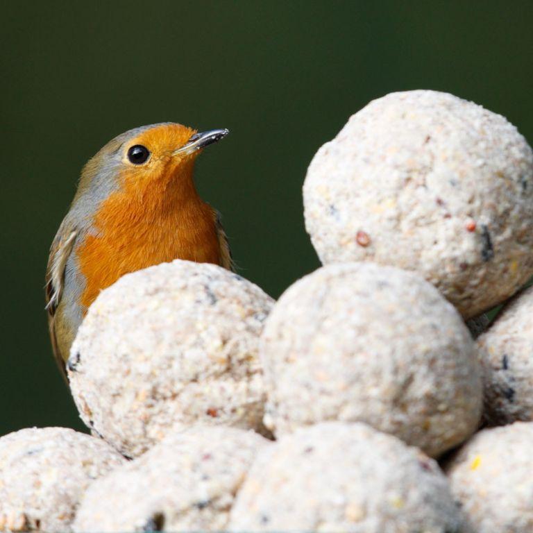 RSPB DIY bird feeder