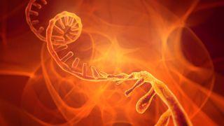 Artist's interpretation of a strand of RNA.