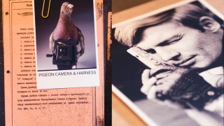 homing pigeons with spy cameras