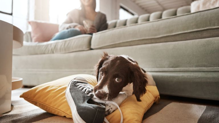 The best ways to clean up after dogs