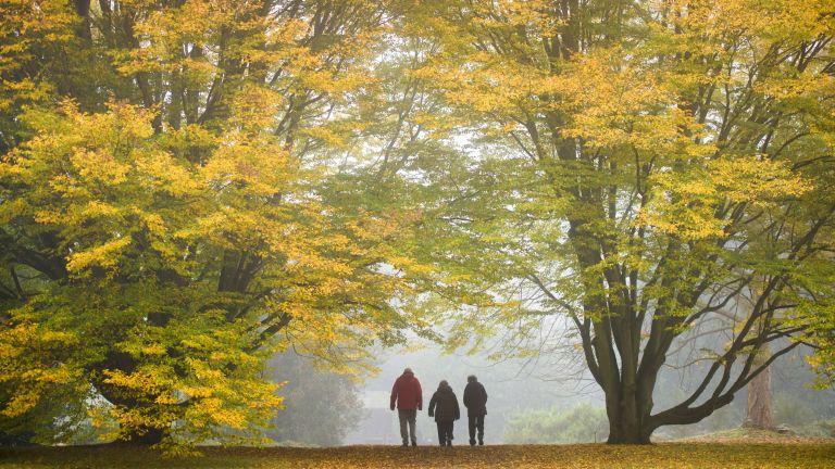 visit autumn gardens